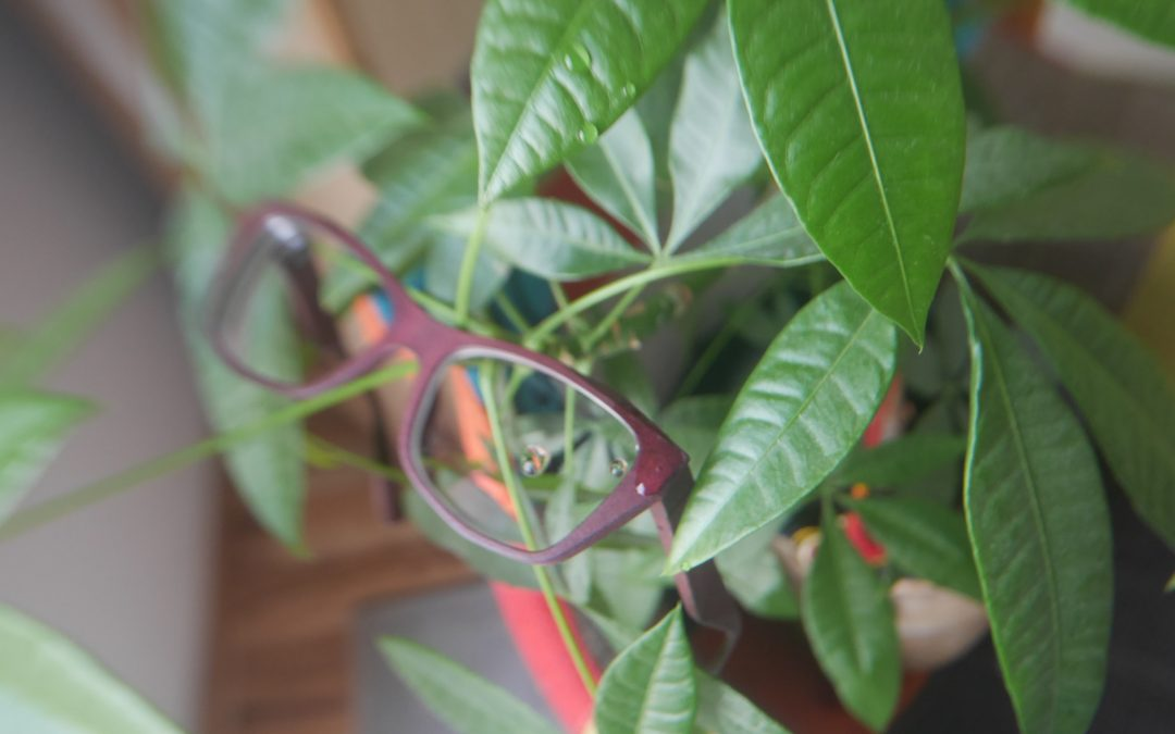 How eyewear goes green – within the realm of the possible